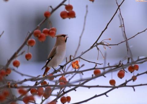 Так же в набор входят птицы, сидящие на городских столбах и.
