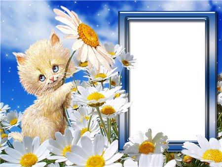 Новая Фото-рамка для Фотошопаа Котёнок с ромашкой Формат файлаPNG.