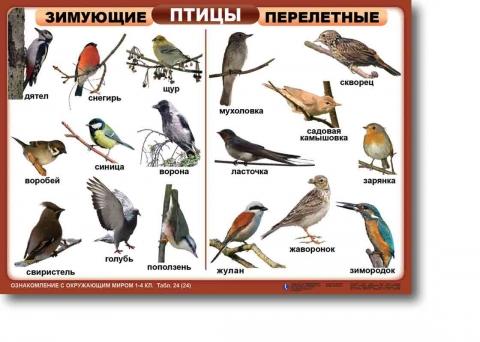 Зимующие и перелётные птицы - Виктория Александровна Федотова.
