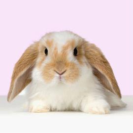"PhotoCol.net  "" кролики фото.  Фото, фотографии, обои, картинки бесплатно.  Фотки коллекция."