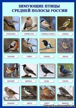 Зимующие птицы средней полосы России.