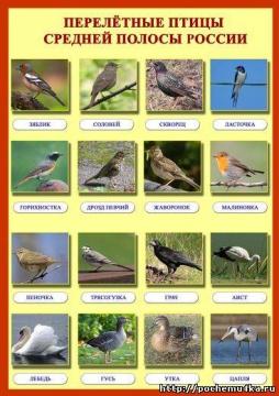 """Плакат  """"Перелётные птицы """".  Просмотров: 11 Загрузок: 0 Добавил: TORG-SERVIS Дата.  Видео для детей и родителей."""
