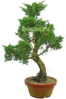 бисероплетение деревья бонсай.