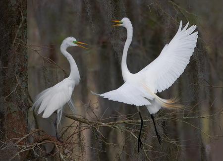 Животный мир :: Фотографии из мира птиц фото 21.